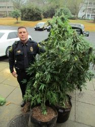 Cop Seizing Pot Plants